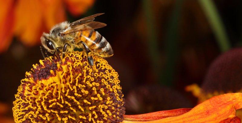 Bee macro 2 31/07/2011