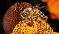Bee macro 1 31/07/2011