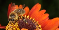 Bee 22/07/2011