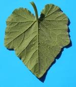 Marrow leaf macromosaic