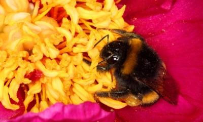 It's pollen time again :)