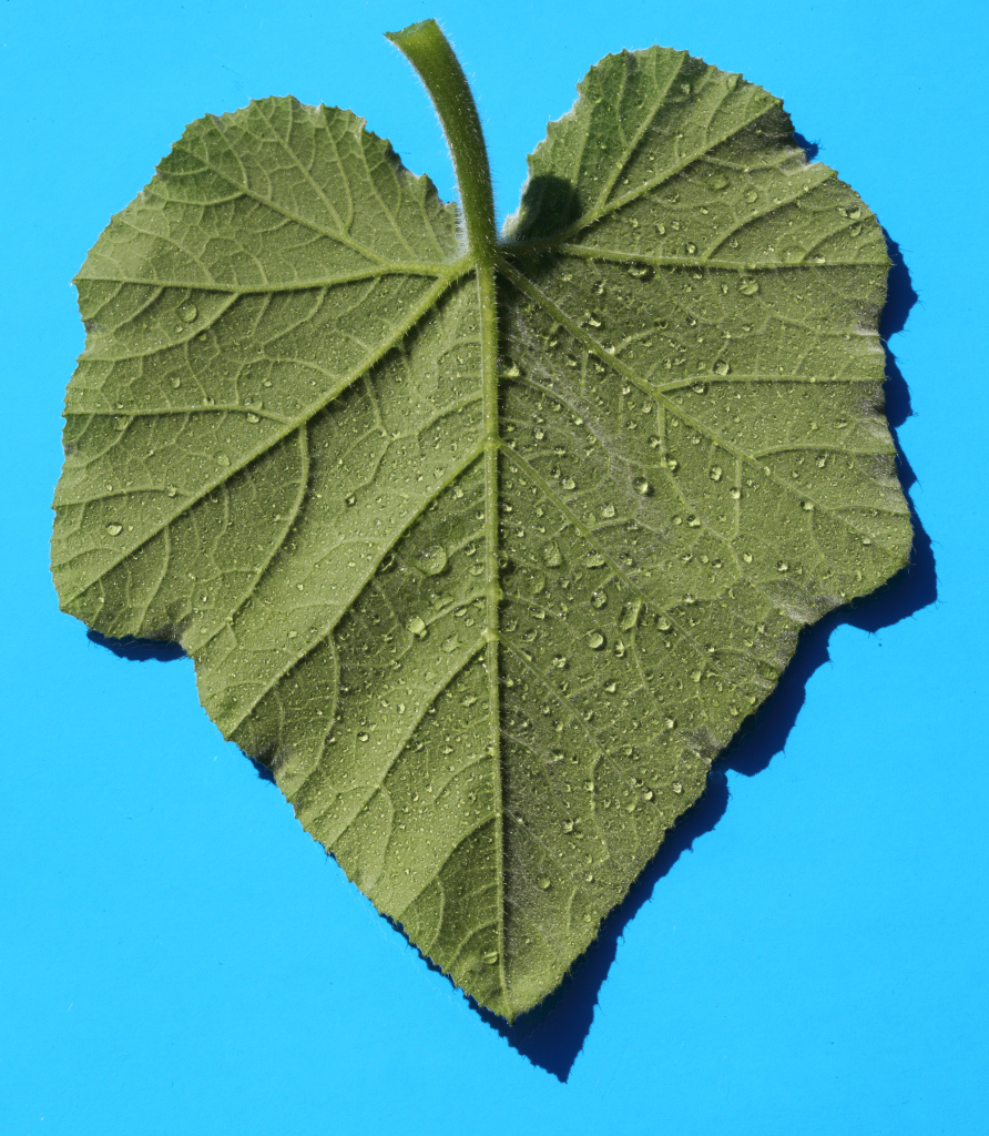 Marrow leaf macromosaic