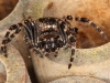 Spider at the Bee Hotel