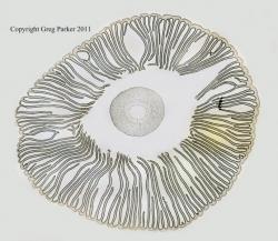 Mushroom cross-section x20